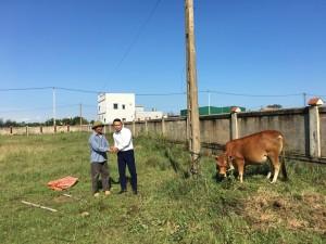 Trường TH & THCS Victoria Thăng Long tặng bò giống sinh sản, hỗ trợ vốn sản xuất cho nạn nhân chất độc da cam tỉnh Quảng Trị và Quảng Bình